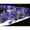 Aquarium Installation/Maintenance Service